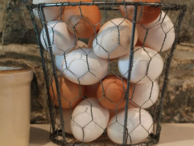 Eggs are placed in the egg cage made from chicken wire.