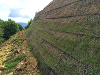 On the surface of the green terramesh, which is installed onto a slope, grass and moss have showed.