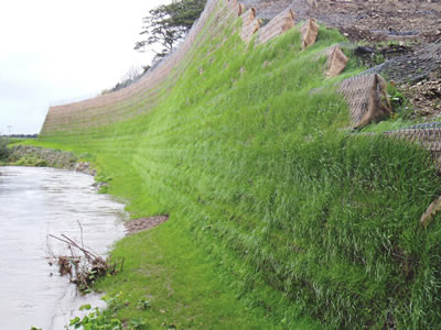 Besides a river, fiber blanket and hexagonal wire mesh made trellis develop a vegetated slope.